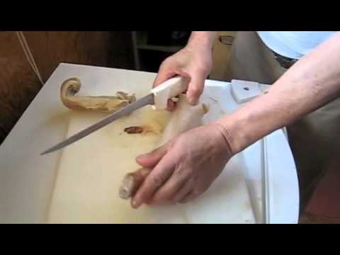 Prepare Geoduck for Cooking