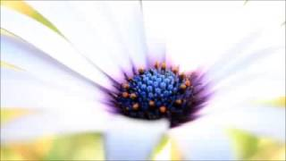 Relaxation 2017 timeless Guided Meditation