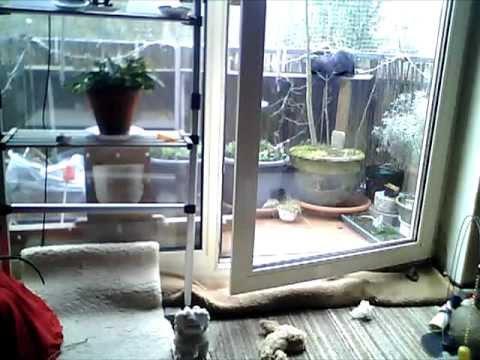 Taijo und kenji und der frühling   zwei schwarze kater und ihr ...