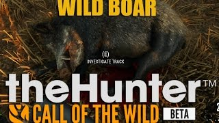 thehunter call of the wild wild boar hunting