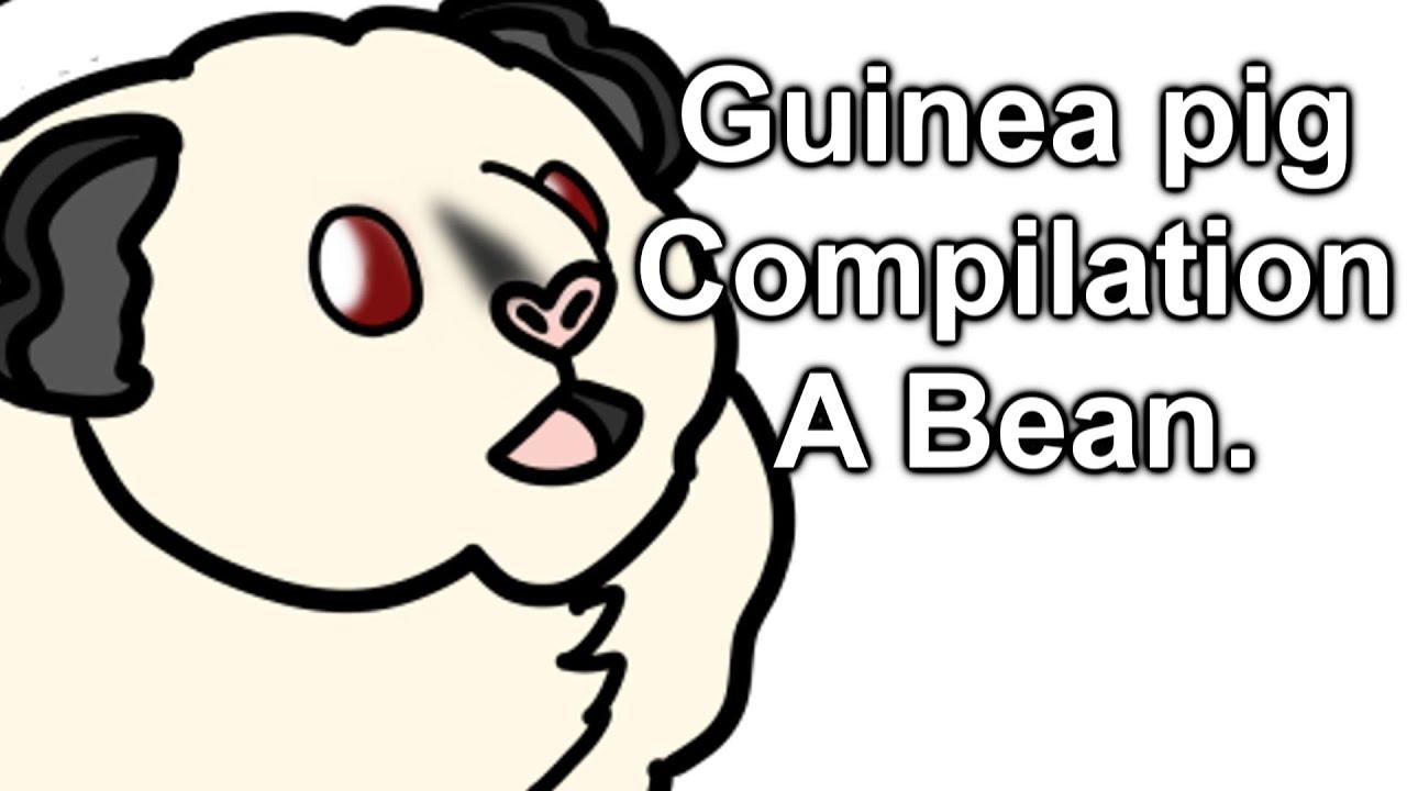 My House pet Albino Guinea Pig named December Compilation. A very cute Fat Bean. Furry Potato 13+