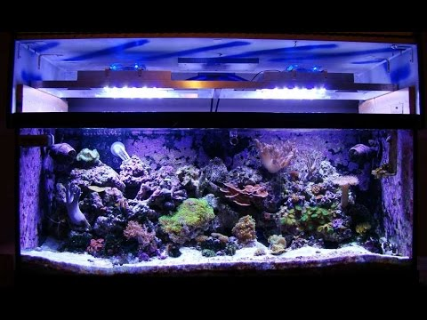 DIY: How to build an LED Reef Tank Light with controller!