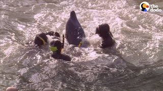 Japan's Dolphin Hunt Just Started Again