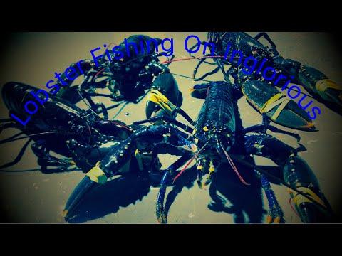 Lobster Fishing In UK