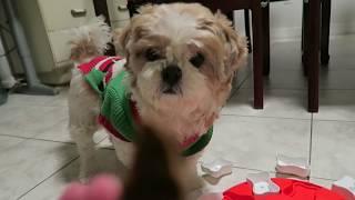 Fuji's New IQ Dog Toy: Dog Smart - Nina Ottosson