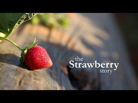 The Strawberry Story  Mapro