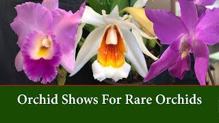 Orchid Types - Visit Shows for Variety and Rare Orchids