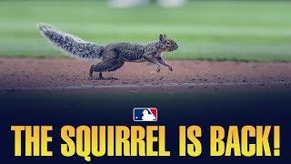 Squirrel interrupts Minnesota Twins games multiple times