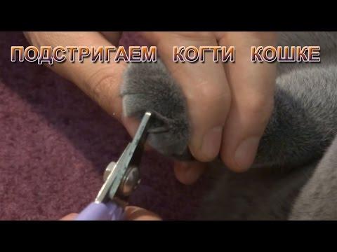 Вопрос: Почему у кота раздваиваются и крошатся коготочки после подстригания?
