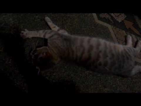Вопрос: Можно ли заставить кота улечься спать?