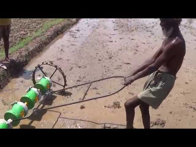 Traditional Direct Paddy Sowing - Trichy