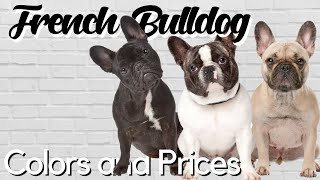Standard and Exotic French Bulldog Colors Explained + PRICE BREAKDOWN