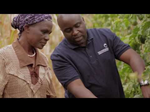 Project Nurture: Growing Prosperity for Africa's Fruit Farmers