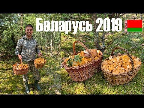 Беларусь грибы! Минск и Минская область.