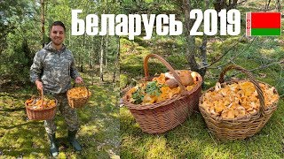 Беларусь грибы 2019 Минск и Минская область.
