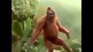 La scimmia che balla