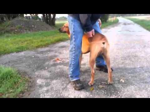 Q Dog Dance back scratch do...
