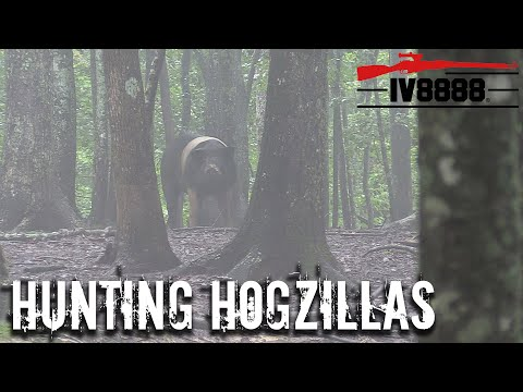 Hunting HOGZILLAS in East Tennessee!