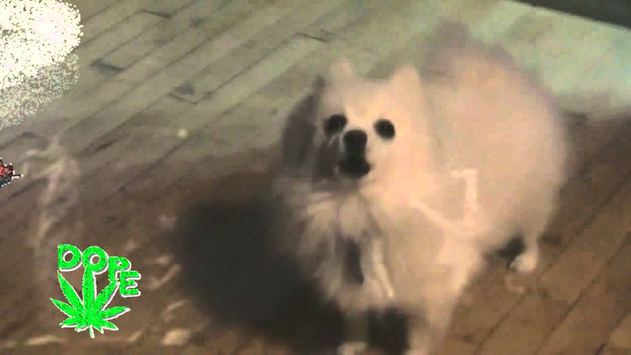 Gabe The Dog Barking Gif