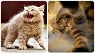 Смешные Кошки 2016! (#13) Веселая Видео Подборка! Смешные Животные 2016/