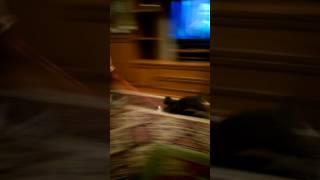 Алина и котенок Новосибирск