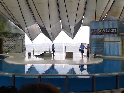 Sea lion show @ subic ocean adventure