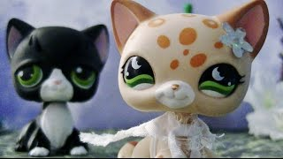 Lps  Love's Not Easy Episode 1