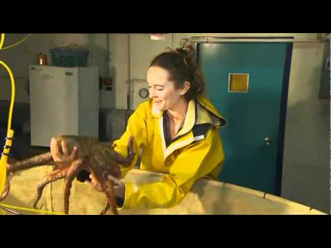 Octopus  Aquaculture