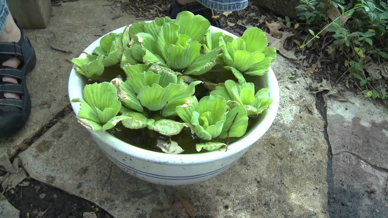 Container Water Garden YouTube