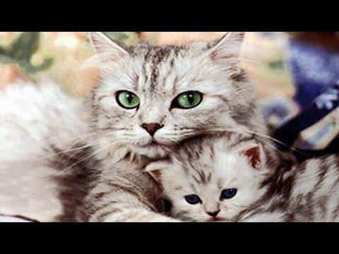 Niedliche Katzen spielen und umarmt Ktzchen  YouTube