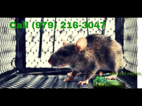 Insect Control in College Station Texas