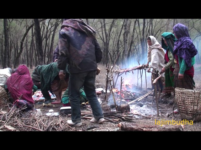 the life into the jungle || himalayan woolen blanket trader ||