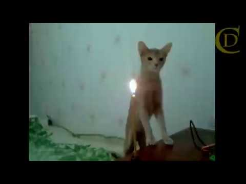 Scared Cat Compilation