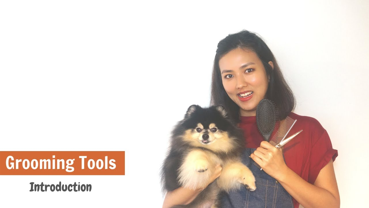 GROOMING TOOLS INTRODUCTION & REVIEW - Our Grooming Secret Weapon ? (ENGLISH SUBS) | ASIAN CUTE DOGS