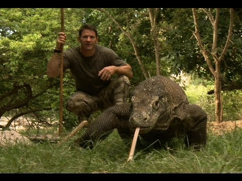Largest Lizard on Earth - The Komodo Dragon - Deadly 60 - Indonesia - Series 3 - BBC