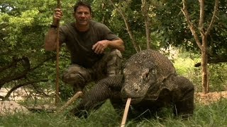 Largest Lizard on Earth | The Komodo Dragon | Deadly 60 | Indonesia | Series 3 | BBC