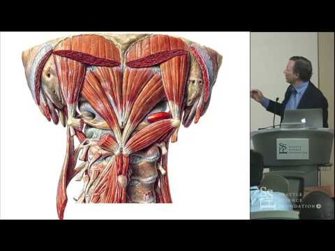 Essentials of Cervicothoracic Spine Anatomy - R.  Shane Tubbs
