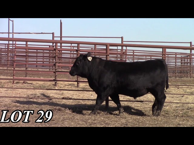 Mead Angus Farms Lot 29
