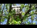 Расставляем ловушки (сезон роения) пасека
