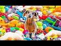 Surprising My Dog With 1,000 Toys