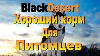 BDO BlackDesert Как приготовить хороший корм для питомцев
