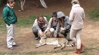Group of girls give Cheetah some love