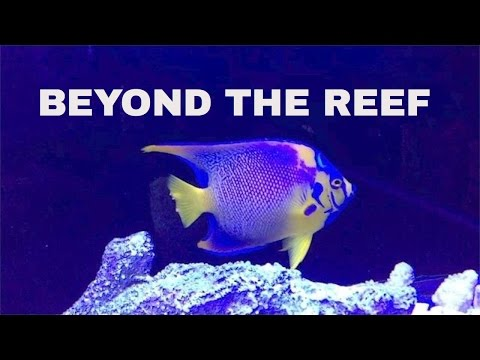 beyond the reef - saltwater aquarium store - schaumburg IL