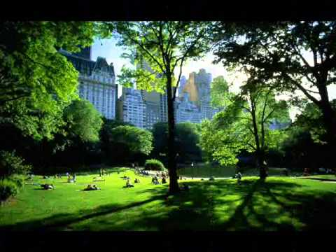 Beautiful Summer in New York City Parks
