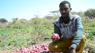The new face of agriculture in Ethiopia