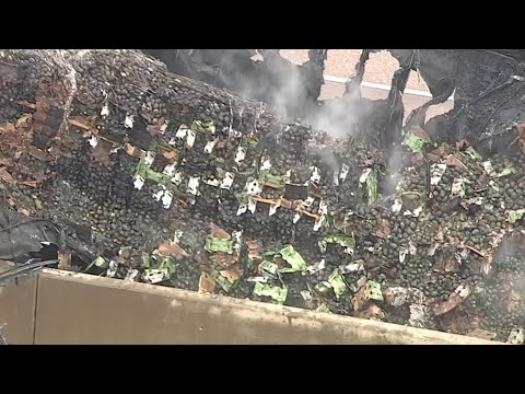 18 tonnes of avocados burn after Texas truck crash