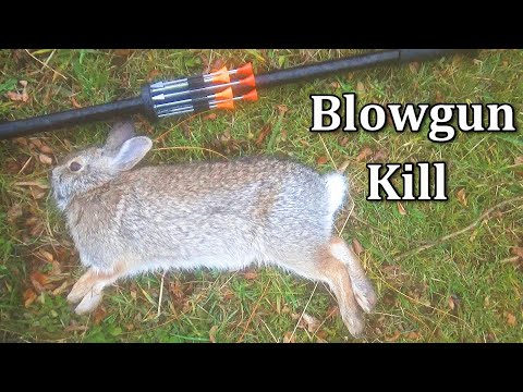 Blowgun Rabbit Hunting With Cold Steel Razor Darts! [Graphic]