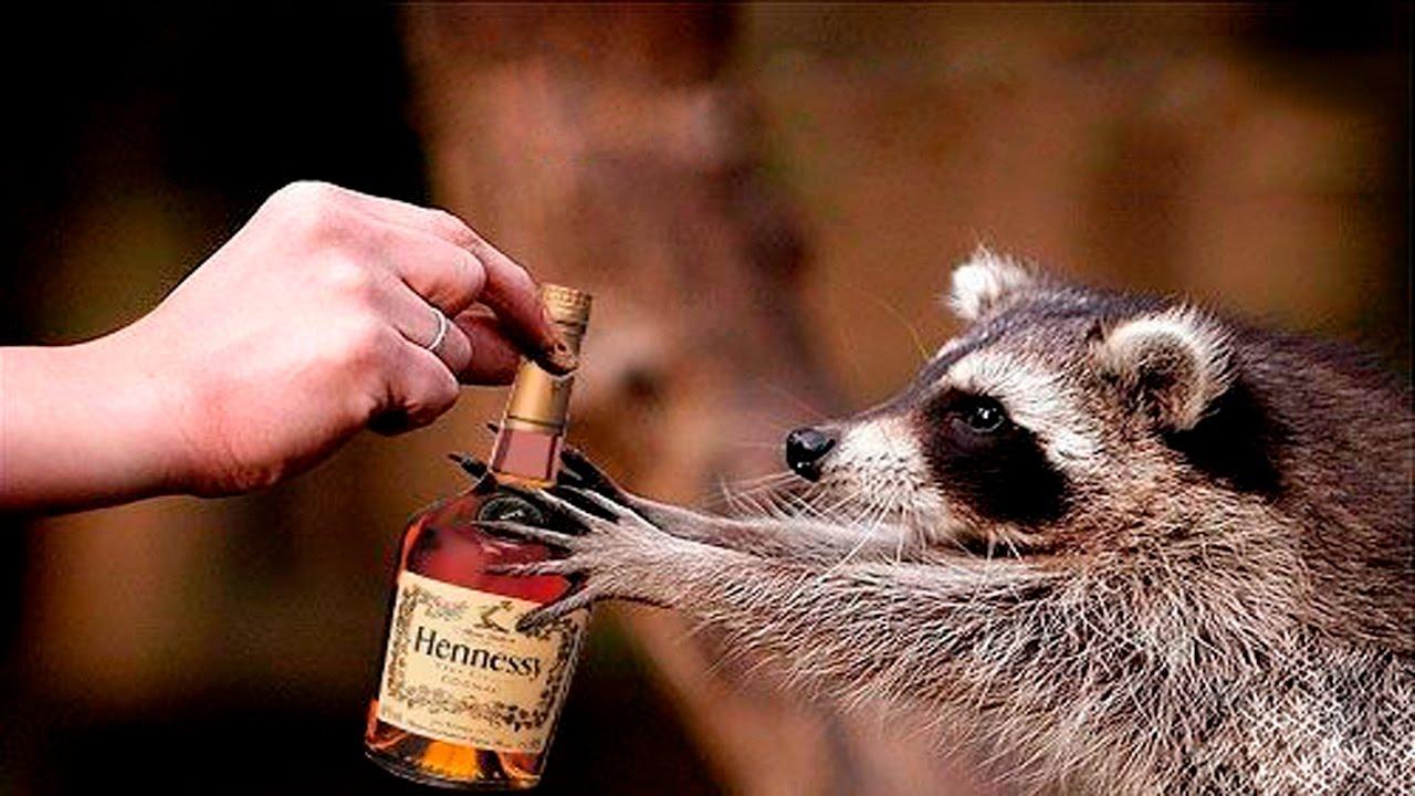 10 самых крепких алкогольных напитков.