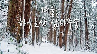 겨울, 하구로산(羽黒山) 천년 삼나무숲 트레킹
