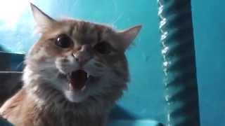 кот атакует
